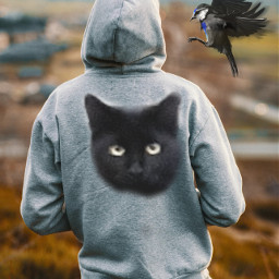 cats birds freetoedit picsart irchoodiefrombehind hoodiefrombehind